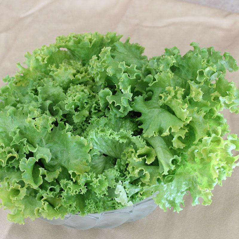 Lettuce1