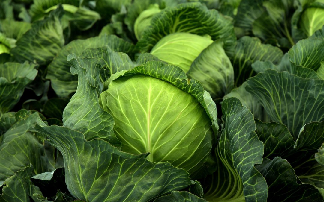 Spicing Up Staples – 2 Cabbage Recipes