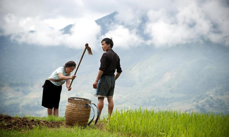 Improving the Lives of Smallholder Farmers