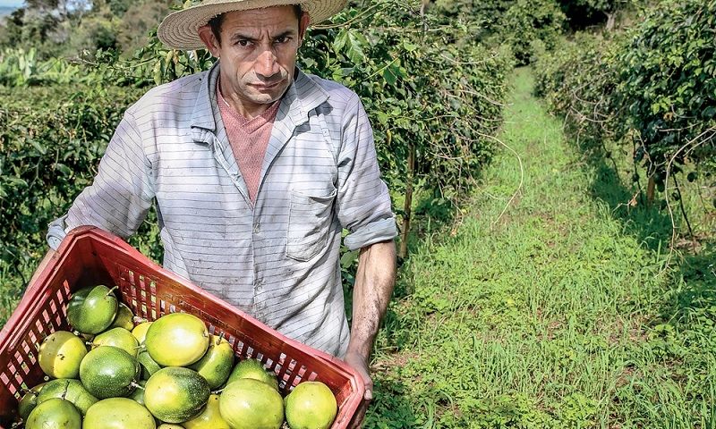 Cooperatives are enterprises created by and for people to serve their members' economic and social needs. Based on values such as self-help, democracy, equality, and solidarity, and guided by principles inspired by those values, cooperatives focus on long-term goals for the greater good, rather than shortterm profits for a few. Through a cooperative, disadvantaged people can create their own economic opportunities, participate in decision-making processes that concern them, and turn individual risk into collective risk. Take the example of Olavo Aparecido Luciano, 46, who lives in Corumbataí do Sul in the Southern Region of Brazil (pictured). When his crops were destroyed by drought and hailstorms, he considered selling his land and moving with his family to a large city to find work. Instead, he decided to join other smallholder farmers in the cooperative Coaprocor, and began producing passion fruit, oranges, and strawberries to salvage his business and earn a sustainable income. Today, Coaprocor has 800 members and has started exporting organic fruit to Germany. Luciano's eldest daughter was able to pursue her studies and will be the first of the family to earn a college degree.