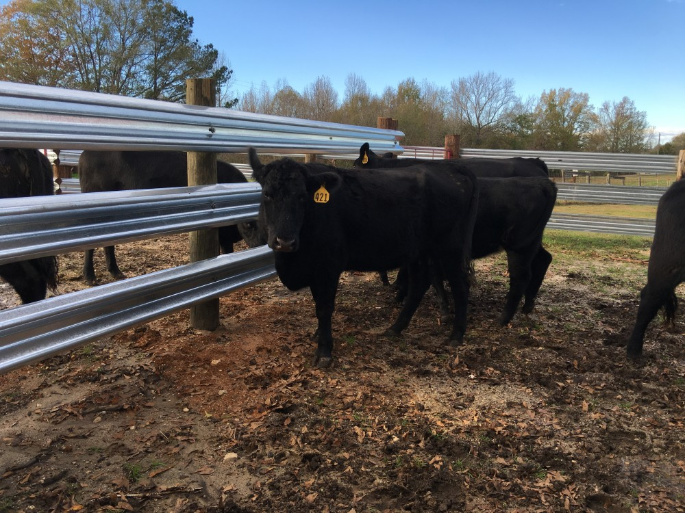 Our 26 foot W-Beam Guardrail makes cows feel safe