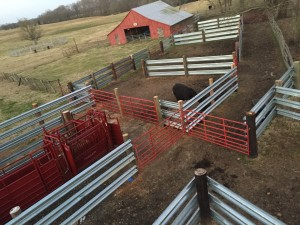 Nice set of guardrail corrals built out of LiveStock Steel