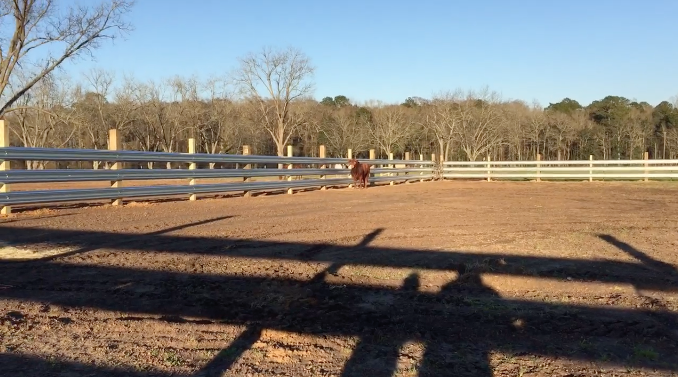 A nice arena built out of LiveStock Steel Guardrail
