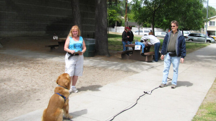Intermediate Obedience/AKC – CGC