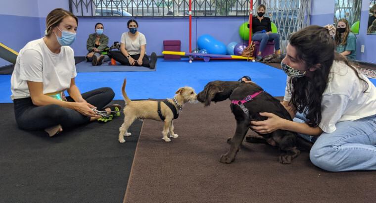 Puppy Great Start: Classes – Studio City