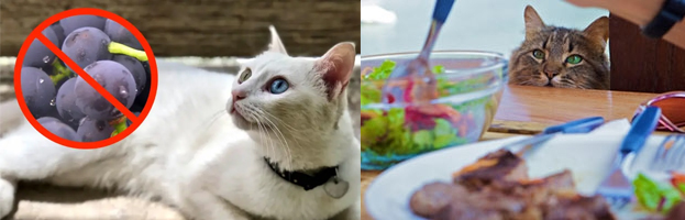 Foods That Are Hazardous to Cats