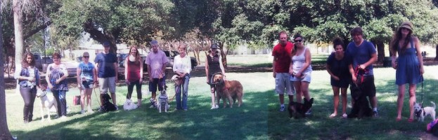 How To Pick A Dog Training Class