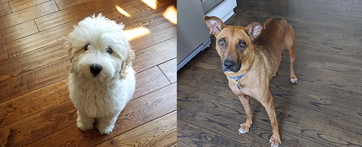 Start Social Distancing From Your Dogs & Pets NOW Before You Go Back To Work!