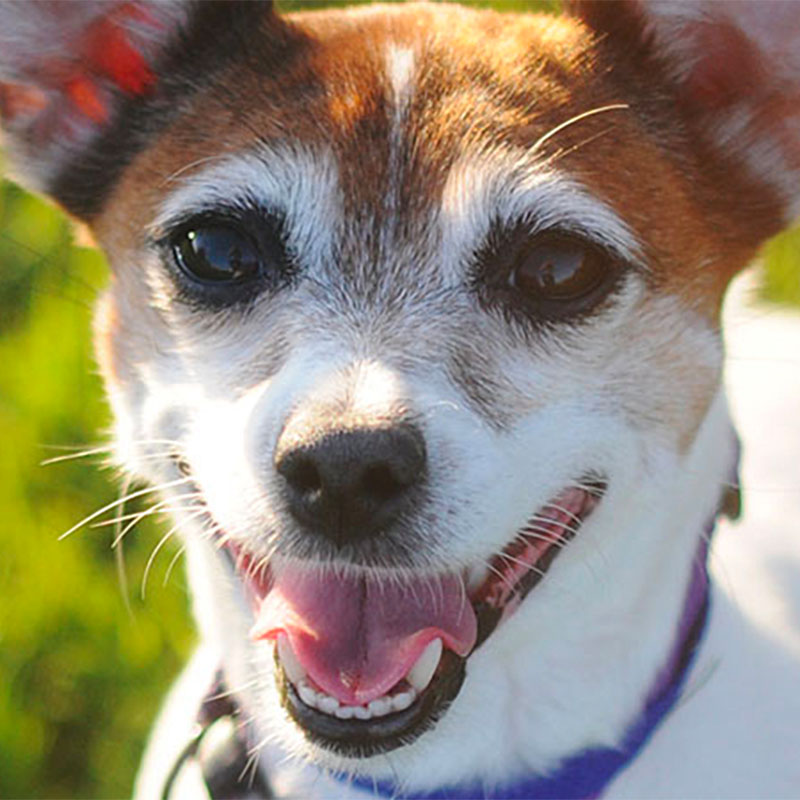 icon of a dog used for the humane society web design project