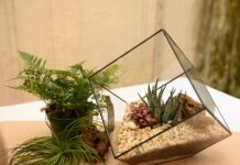 terrariums team building in Singapore