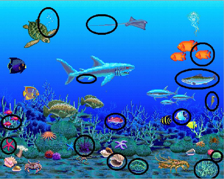 sea answers 15