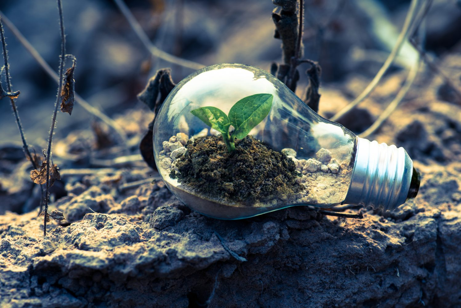 Sprouting plant growing inside of a lightbulb that is laying down on a desolate area of dirt