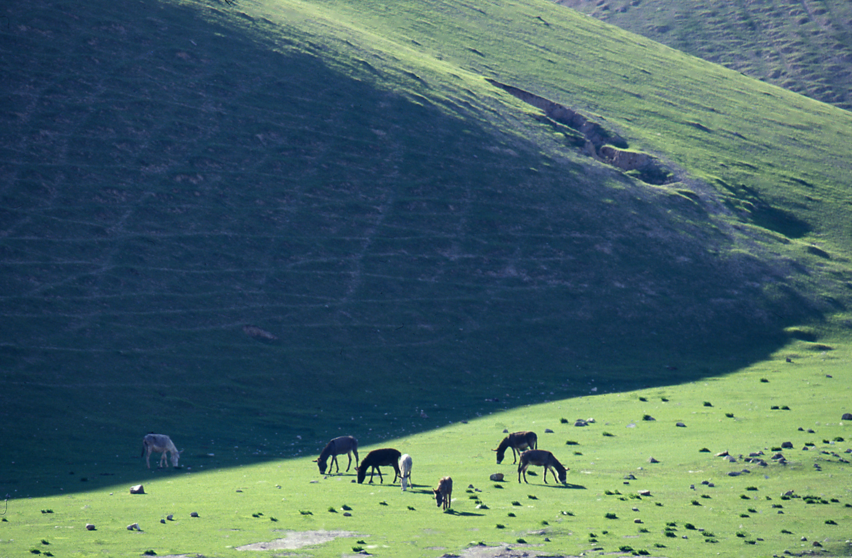 Afghanistan KHS115