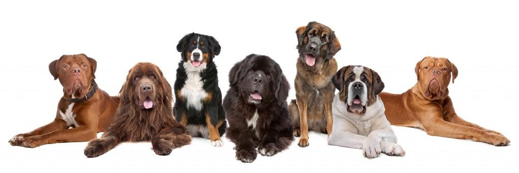 dooty-free-dogs