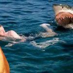 Feministas claman por incrementar la cuota de las mujeres en los ataques de tiburones