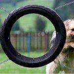 Colegios caninos del país también se rajaron en pruebas PISA