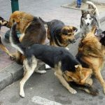 Preocupación por aumento de matoneo entre mascotas