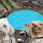 Lista la licitación para piscina de perros en glorieta de calle sexta