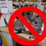 Consulta antitaurina incluye prohibir trampas para ratones