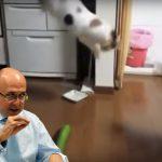 Fiscal investigará a quienes pongan pepinos cohombros a sus gatos