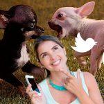 Nueva aplicación indica lado correcto para estar en polémicas de redes sociales