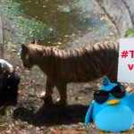 Dejan que tigre se coma a un niño en China por miedo a reacción en redes sociales