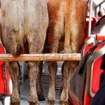Transmilenio se uniría a paro de transportadores de ganado