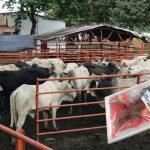 Desmienten que quienes comieron carne con aftosa también deban ser sacrificados
