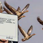 Trump anuncia que aves migratorias no podrán regresar a Estados Unidos y las llama «perdedoras»