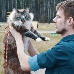 Crecen casos de jóvenes urbanos que tienen gato solo por obligación