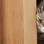 Gatos del mundo van (por fin) a definir oficialmente si quieren salir o entrar