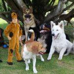 Niños se están disfrazando de perro para poder ir al colegio