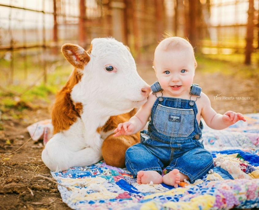 Baby portrait with baby cow