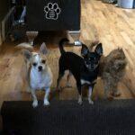 Petey, Simone and Annie