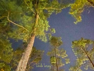 Georgia Pines 120 Jigsaw Puzzle