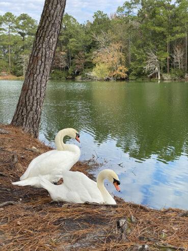 Swan Lake 120 Jigsaw Puzzle