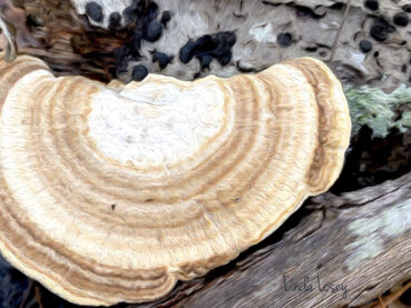 Winter Fungus 120 Jigsaw