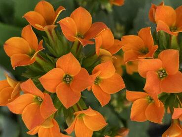 Bright Orange Flowers 120 Jigsaw Puzzle