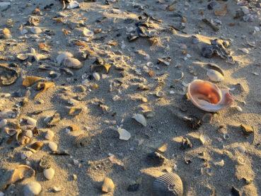 Seashells by the Seashore 120 Jigsaw