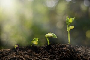 Image of 4 seedlings, each in a new stage of growth.