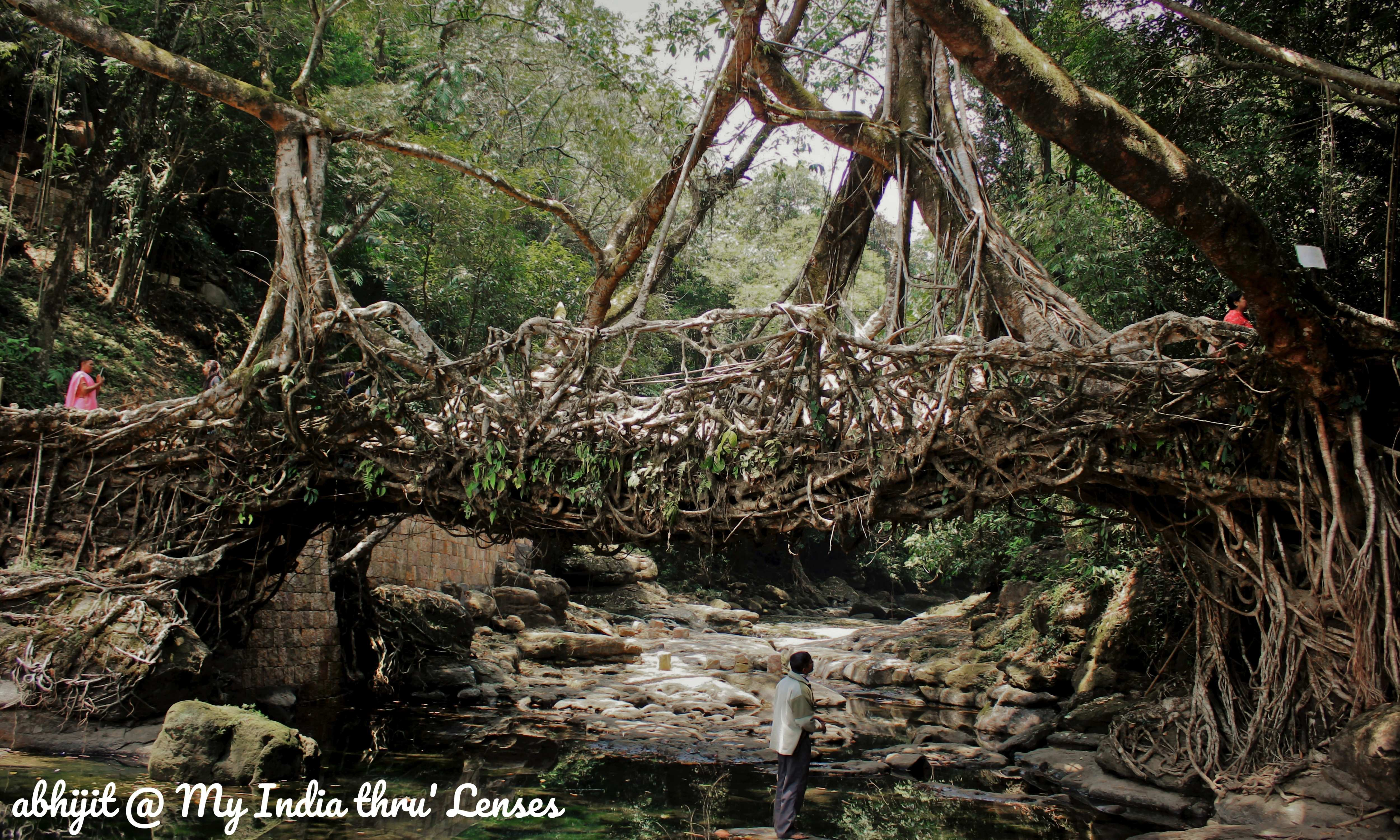 Living Root Bridge