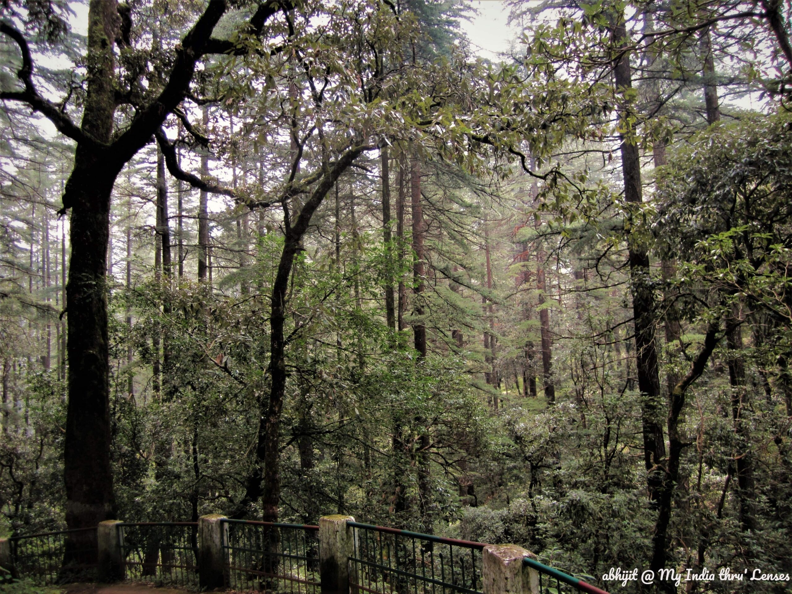 The way towards the Temple through deodar & pine forest