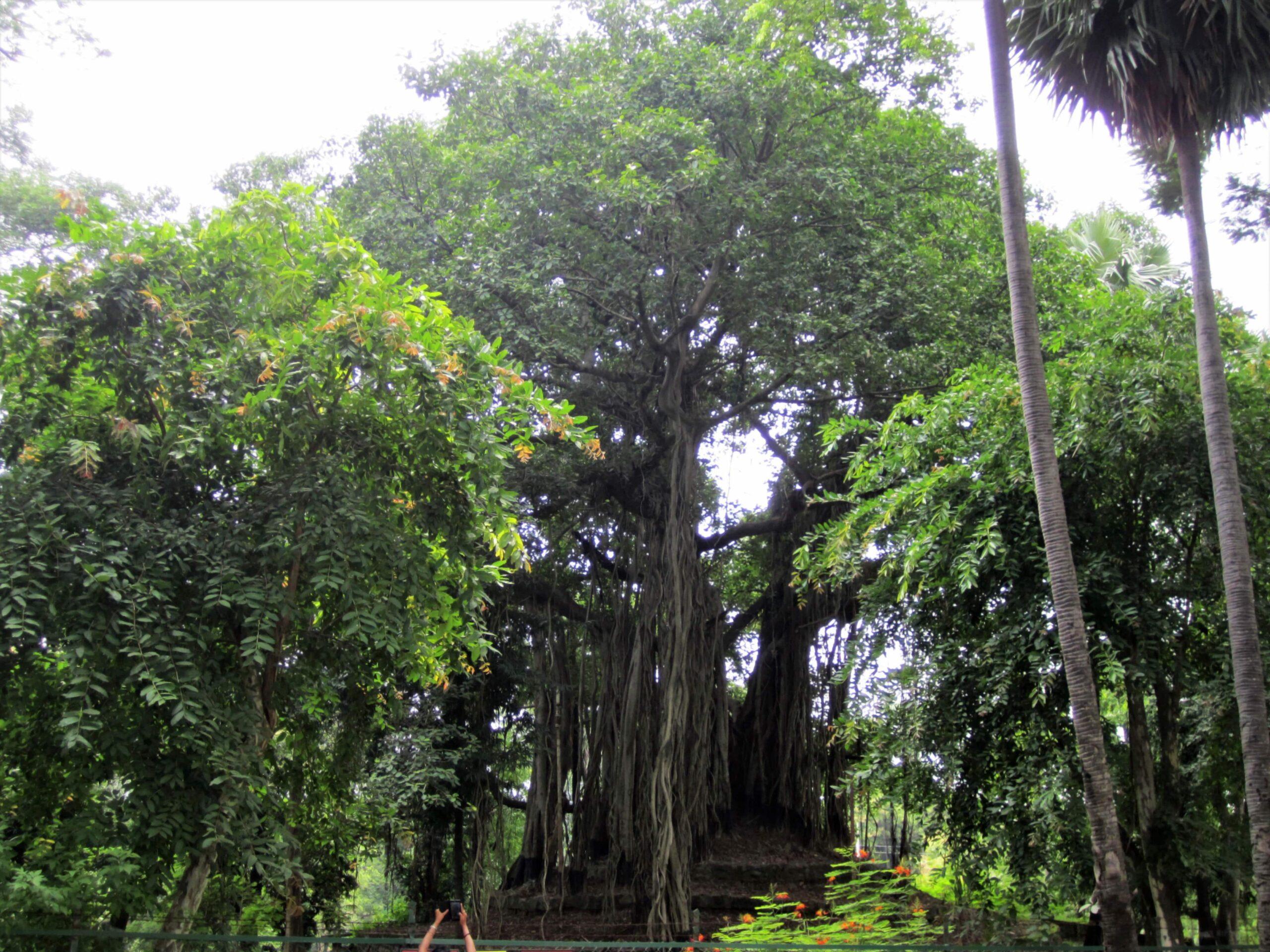 Teenpahar - The Banyan Tree within Vishva Bharati University Complex