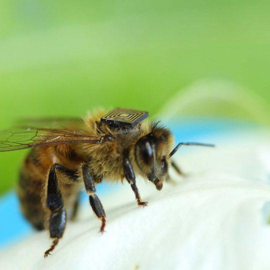https://secureservercdn.net/104.238.71.109/p17.036.myftpupload.com/wp-content/uploads/2015/11/honey-bees--540x540.jpg