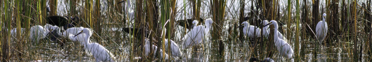 A Weeks' End at St. Mark's National Wildlife Refuge