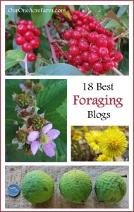 18-Best-Foraging-Blogs-649x1024