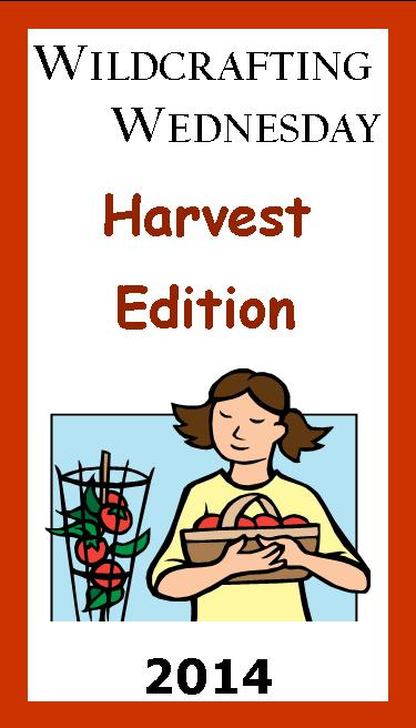 Wildcrafting Wednesday – Special Harvest Edition