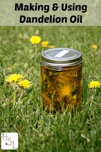Making-and-Using-Dandelion-Oil