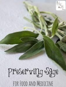 Preserving-Sage-for-Food-and-Medicine