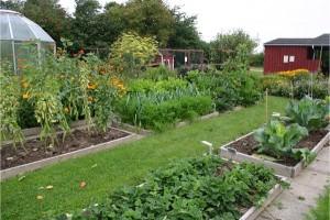 Grow-pest-free-garden-7